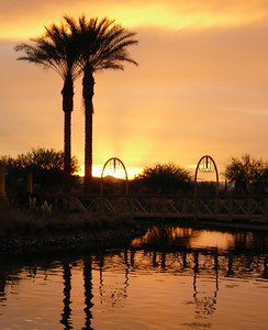 0188 Palms at Sunrise crop