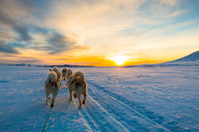 Sunset with Huskies in Iceland
