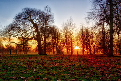 Evening glow in Hyde Park