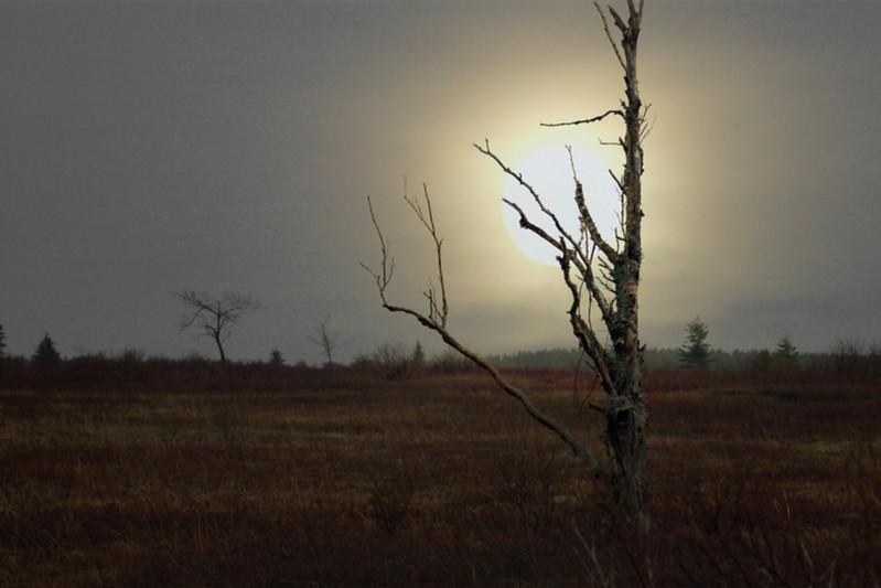 landscape-with-blur