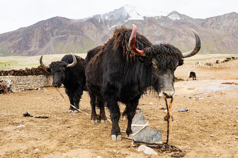 Pastoralism VII