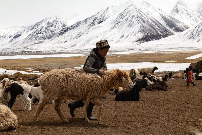 Pastoralism VI