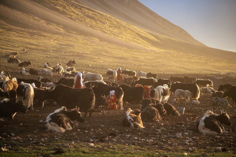Pastoralism III