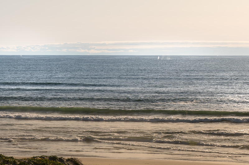 Whale activity: spouts along the horizon line at Surf Beach