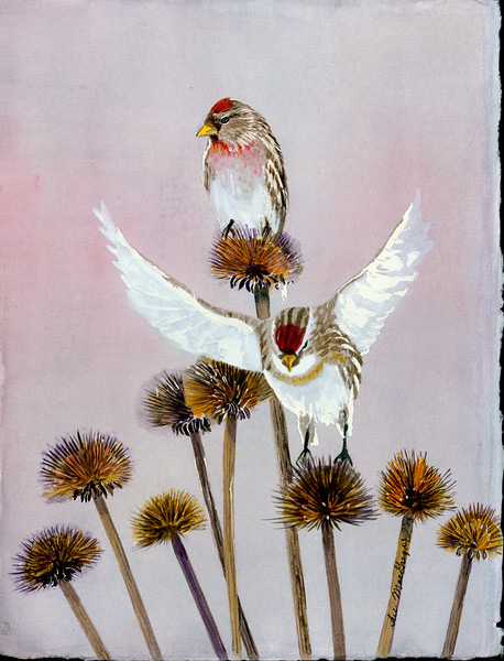 Redpolls In Thistles–SOLD