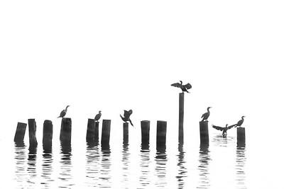 A Story of Birds