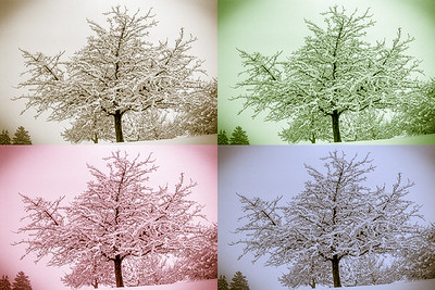 Tree in a snowstorm - sepia, green, magenta, blue. Horgen, Switzerland - First snow, 1978.