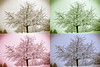 Tree in a snowstorm - sepia, green, magenta, blue.<br /> Horgen, Switzerland - First snow, 1978.