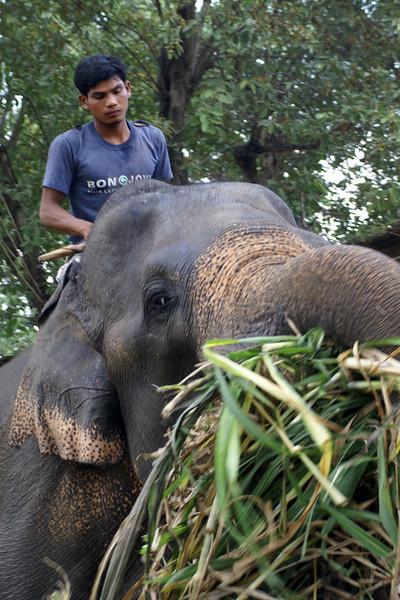 ELEPHANT STAY. AYUTTHAYA.
