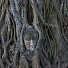 AYUTTHAYA. BUDHHA HEAD IN A TREE.