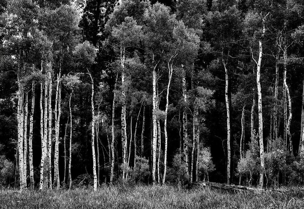 Sticks In A Field