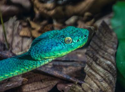 Snake_Costa Rica