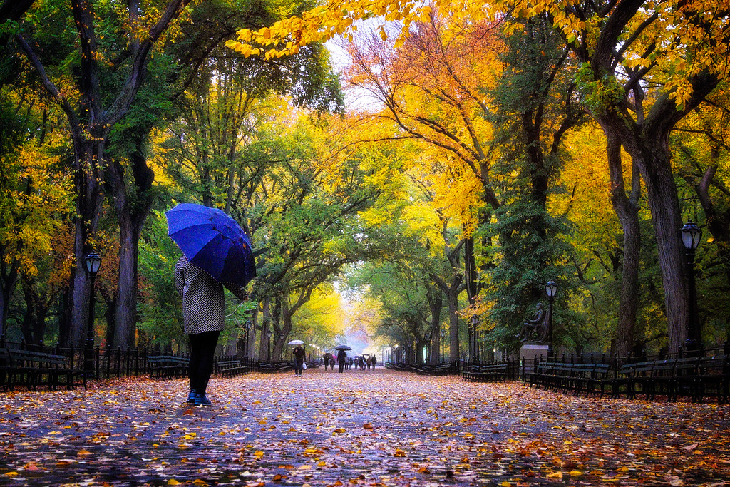 Walk In The Park One Rainy Day With a Blue Umbrella