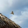 <center>IMG#0796  Aruba - 2013<center>
