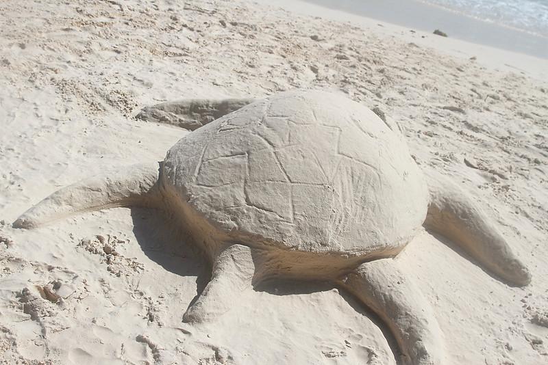 Sea Turtle completed from sand on Eagle Beach, Aruba-2014