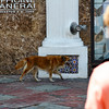 Stray dogs tour the downtown sidewalks...Aruba-2014
