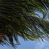 <center>IMG#0785J  Aruba - 2013<center>