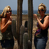 IMG#1023<br /> <br /> Native Cactus grow on the western, undisturbed end of Aruba<br /> Rachel & Amanda