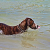 Beach goes to the dogs...Key West, Fla. 4/23/14