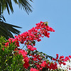 Tropical botanicals-Key West, Fla. 4/23/14
