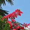 Tropical botanicals-Key West, Fla. 4/23/14