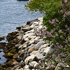 "<center>IMG#1228 Rocky Edges of ""Cliff Walk"" Newport, Rhode Island<center>"