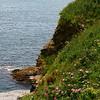 """<center>IMG#1226 """"Cliff Walk"""", Newport, Rhode Island<center>"""