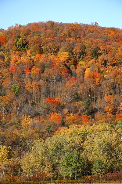 """<center>IMG#5591 Local farmlands lie at the mountains' base and provide spectacular views of the """" Tapestry of Fall Foliage Warren county, Pennsylvania October 10, 2010<center>"""