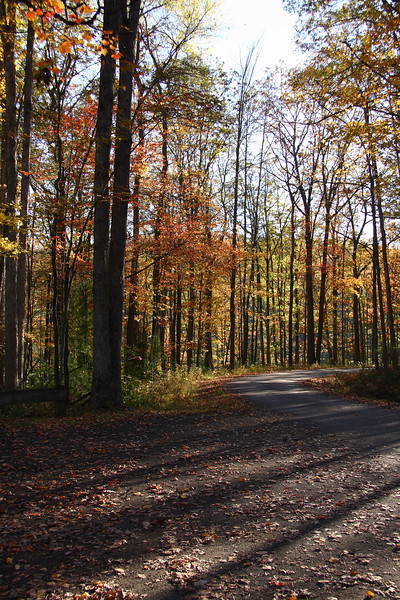 """<center>IMG#5557 Late afternoon  forest road along the """"Grand Canyon"""" trail Tioga County, Pennsylvania October 9, 2010<center>"""