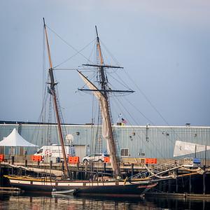 Lynx at Dock