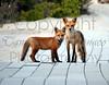 Fox and Kit MONACO 060213