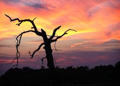 SUNSET TREE, MANOR, TEXAS