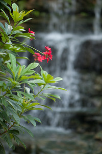 FLOWERS AT THE WATERFALL, ZILKER BOTANICAL GARDEN