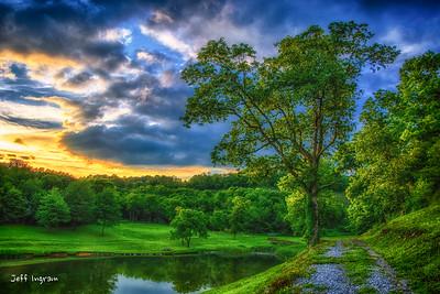 Lincolnshire Tree