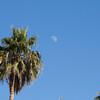 palms_moon