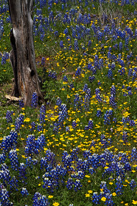 Texas  IMP_6696MZ