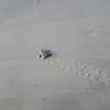 turtle tracks too