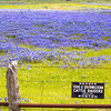 cattle raiser blues