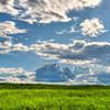 Simple Landscape - Smithville, Texas
