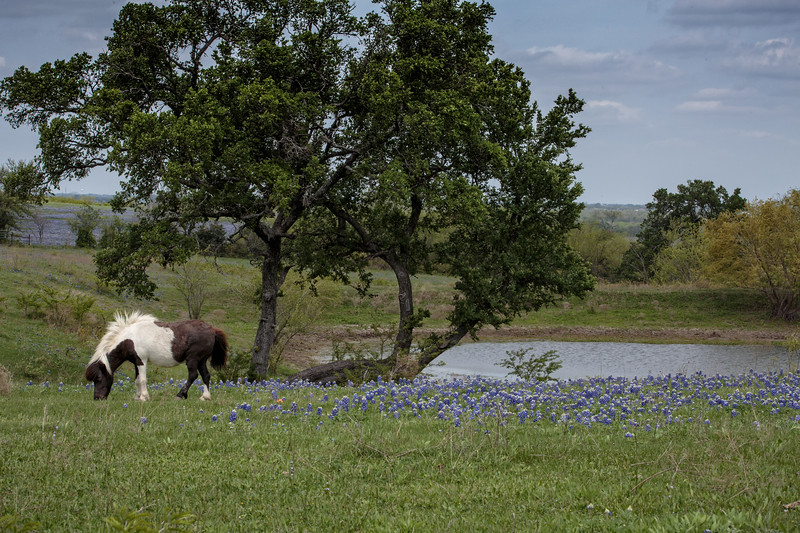 Apr 12-Blue Bonnet Trail, Ennis, TX-0336