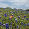 Apr 12-Blue Bonnet Trail, Ennis, TX-0369