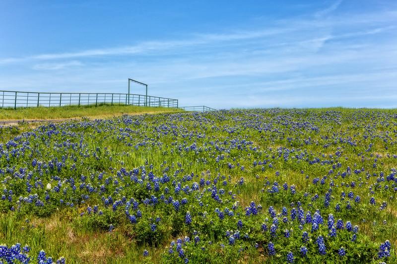 Apr 05-Blue Bonnet Trail, TX-1696