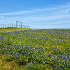 Apr 05-Blue Bonnet Trail, TX-1696