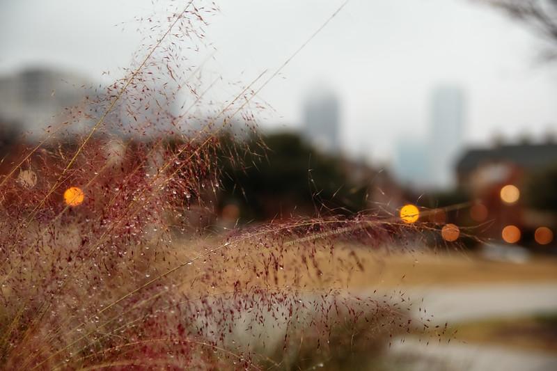 Jan 01-Dallas, TX-7322L-2