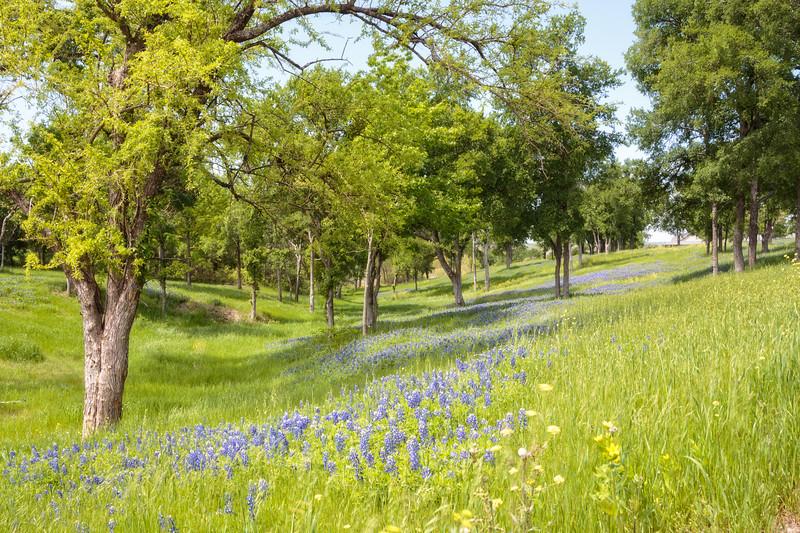 Apr 13-Dallas, TX-1804-Edit