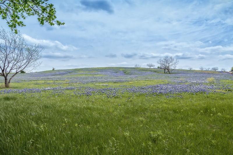 Apr 12-Blue Bonnet Trail, Ennis, TX-0327