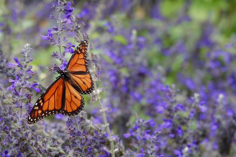 Oct 12-Dallas Arboretum-6537