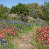 Apr 03-Hill Country, TX-7504-Edit