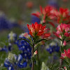 Apr 12-Blue Bonnet Trail, Ennis, TX-0344-Edit