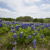 Apr 12-Blue Bonnet Trail, Ennis, TX-0366